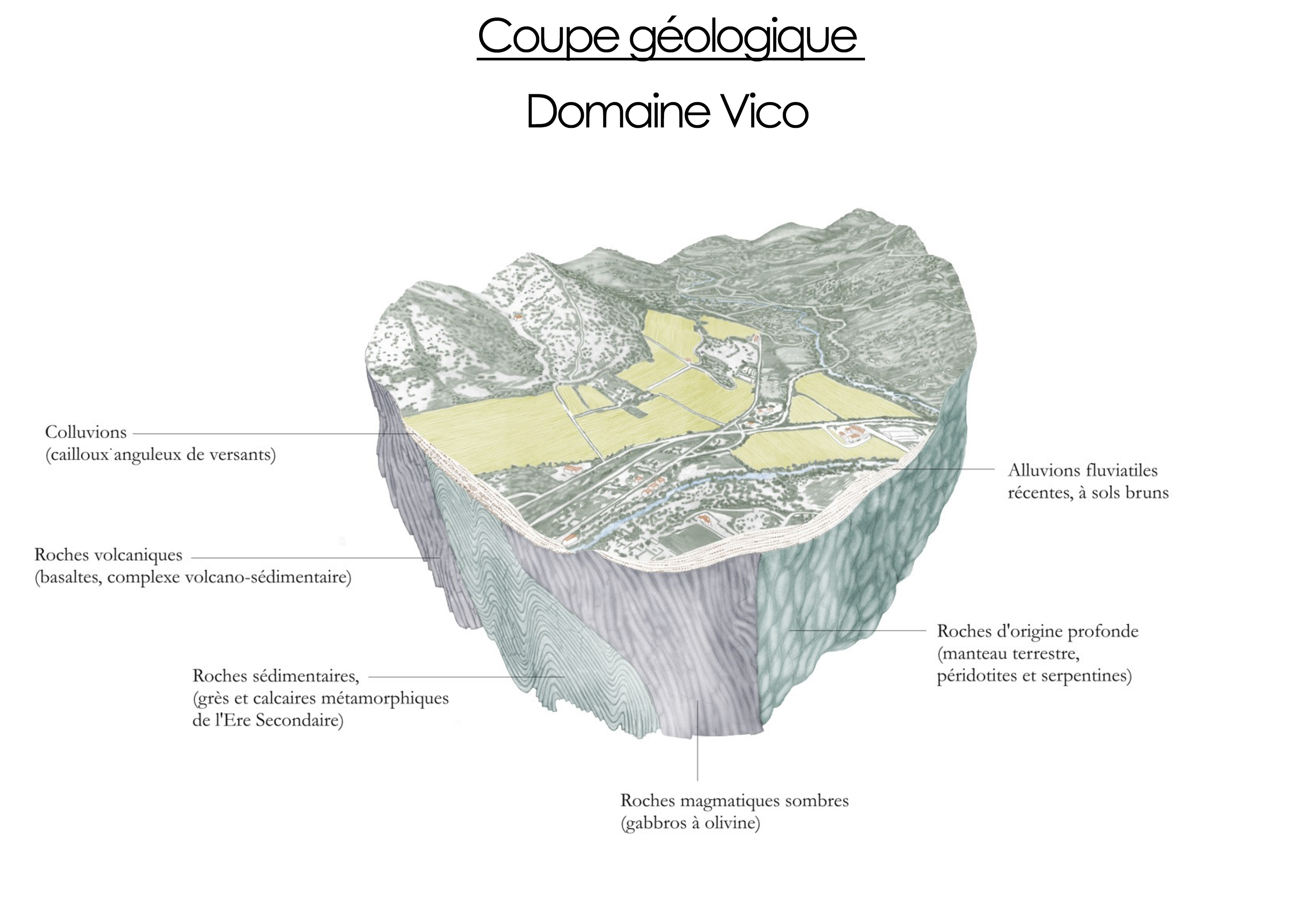 coupe_vico