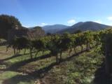 Les vignes Vico du coté du vieux four